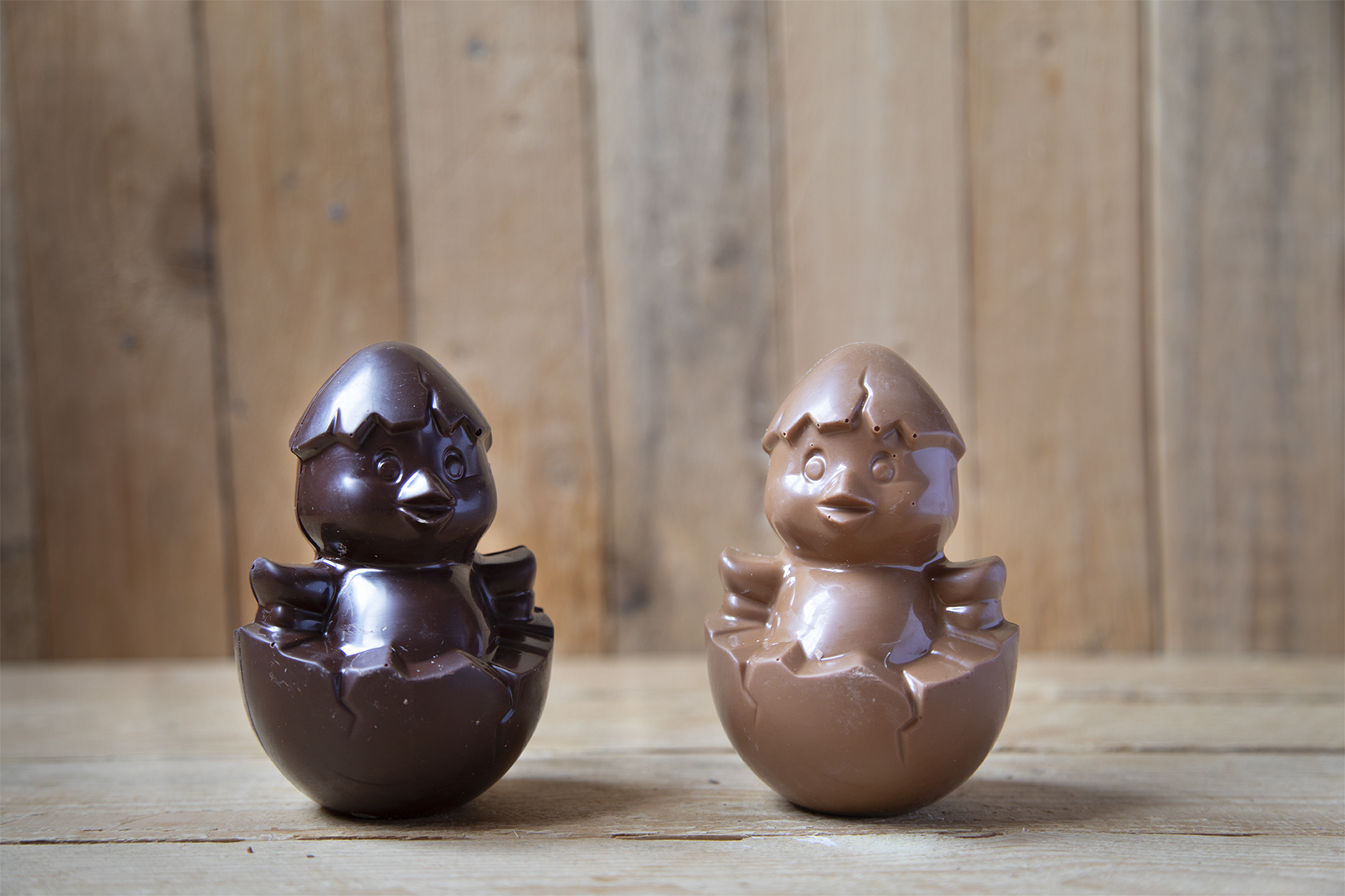 Pulcino di cioccolato al latte